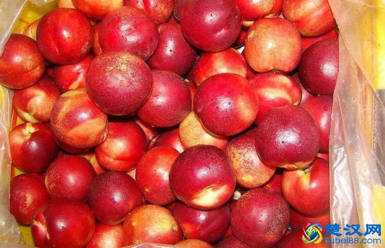 四井岗油桃介绍 四井岗油桃口感特点及生产要求