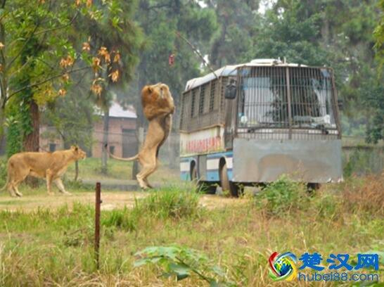 武汉九峰森林动物园游玩攻略/景点介绍/门票线路住宿详情