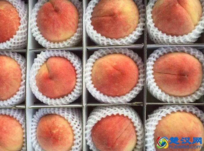 杨店水蜜桃介绍 杨店水蜜桃的特点及历史由来