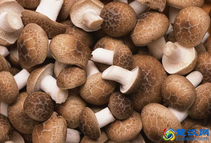 远安香菇介绍 远安香菇的历史及特点