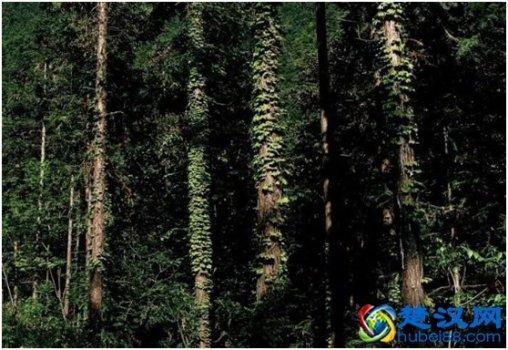 房县诗经源国家森林公园游玩攻略 诗经源森林公园景点介绍/线路详
