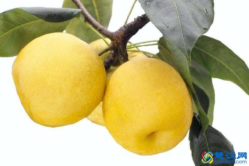 枣阳梨介绍 枣阳梨的口感及产地特点