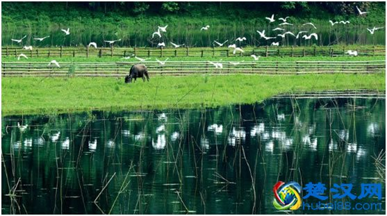 通城大溪国家湿地公园景点介绍,大溪国家湿地公园游玩攻略