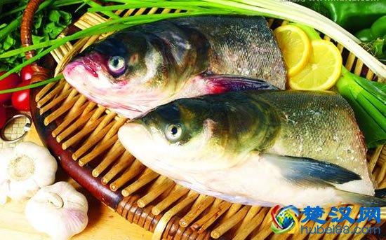 罗田胖头鱼特色介绍,罗田胖头鱼的做法及美食推荐