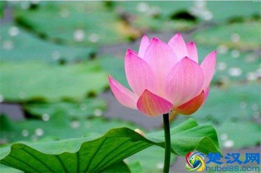 夏天的花有哪些,盘点十种夏季开放的花卉