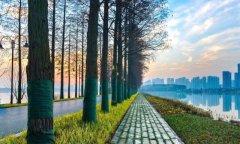5年生态文明建设征程 武汉随处可见青山绿水